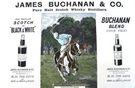 Buchanan's Whisky Polo Advert - Image 1